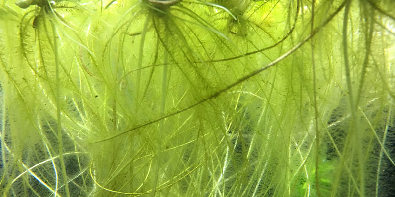 aquarium-floating-plant-roots