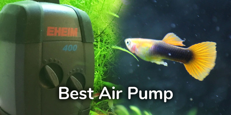 best-air-pump-guppies