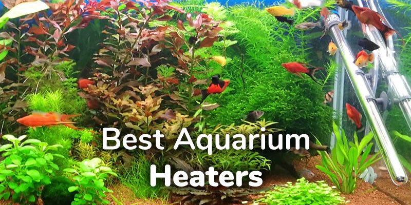best-aquarium-heater