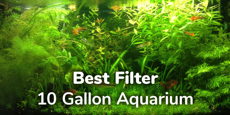 best-filter-10-gallon-aquarium