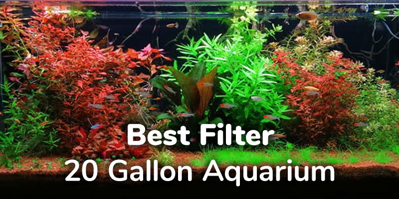 best-filter-20-gallon-aquarium