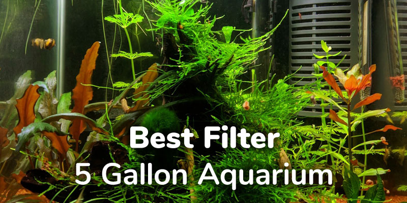 best-filter-5-gallon-aquarium