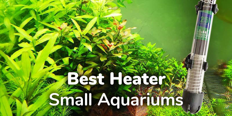 best-heater-small-aquarium