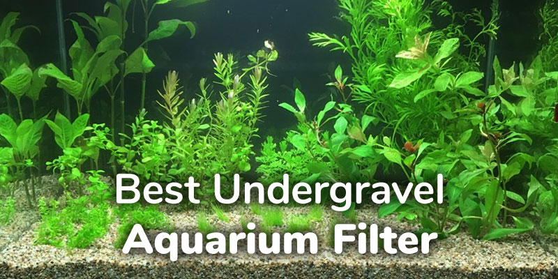 best-undergravel-aquarium-filter