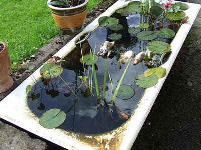 guppy-fish-pond-tub