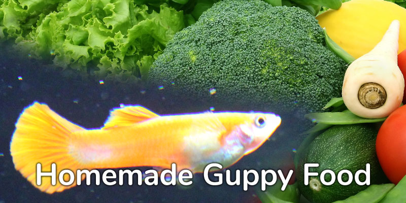 homemade-guppy-food