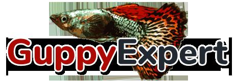 GuppyExpert.com